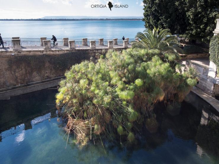 Locale commerciale in affitto Ortigia Bellomo